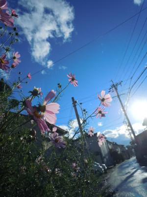 fleur-fle 131.JPG